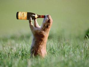 Drunk Weasel